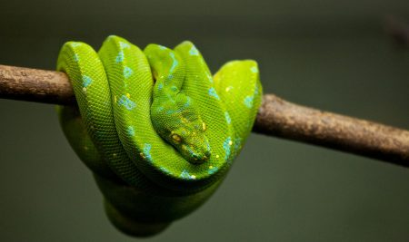 Hands on with Python 3.7: what's new in the latest release